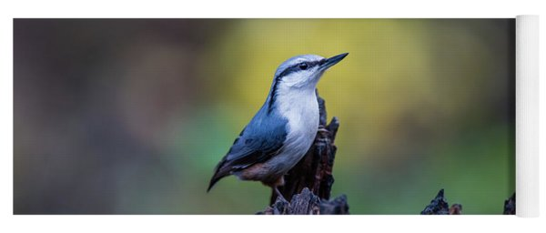 Nuthatch On The Spot Yoga Mat