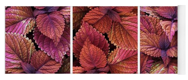 Yoga Mat featuring the photograph Coleus Collage II by Jessica Jenney