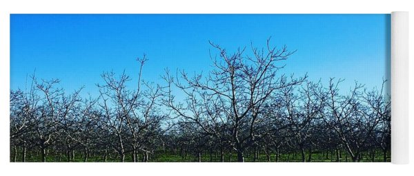 Orchard Trees In Blue Yoga Mat