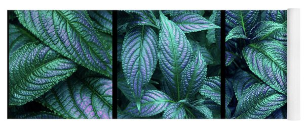 Yoga Mat featuring the photograph Persian Shield Triptych by Jessica Jenney
