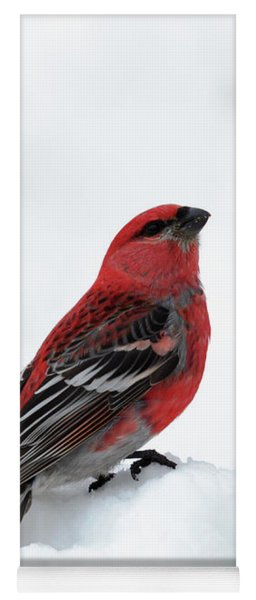 Yoga Mat featuring the photograph Pine Grosbeak In The Snow by Susan Rissi Tregoning