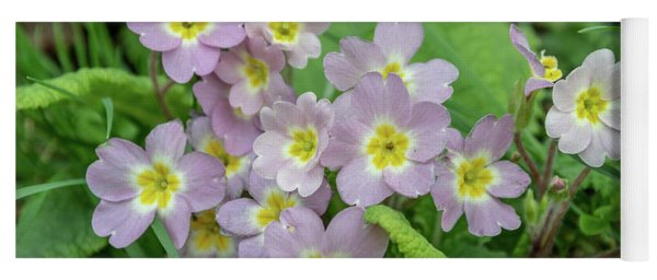 Pink Primroses In Devon Yoga Mat