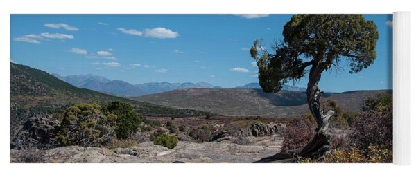 Pinyon Pine With North Rim In Background Black Canyon Of The Gunnison Yoga Mat