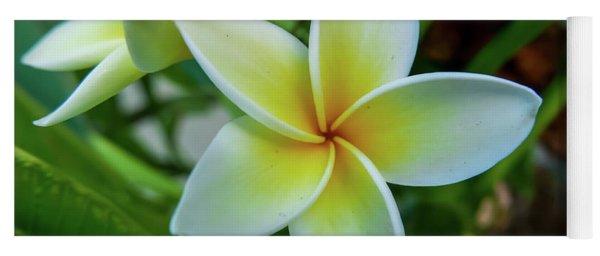 Plumeria In Bloom Yoga Mat