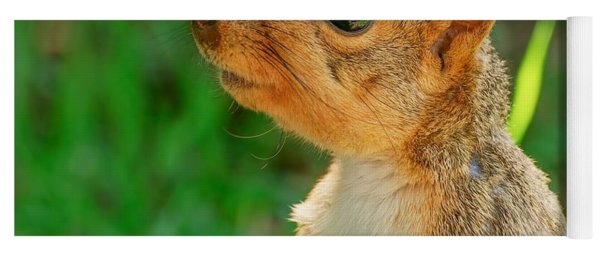 Pondering Squirrel Yoga Mat