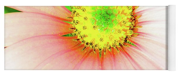Pop Art Osteospermum 1 Yoga Mat