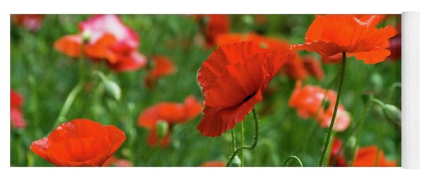 Poppies In The Field Yoga Mat