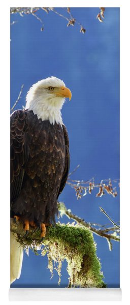Portrait Of A Backlit Bald Eagle In Squamish Yoga Mat