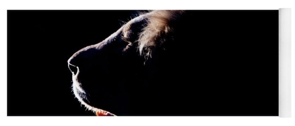 Portrait Of A Backlit Male African Lion Yoga Mat