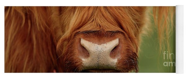 Portrait Of A Highland Cow Yoga Mat