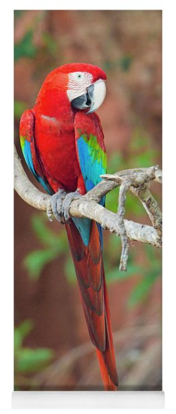 Portrait Of Red-and-green Macaw, Porto Yoga Mat