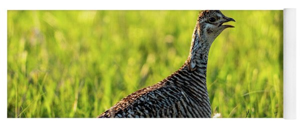 Prairie Chicken Hen Yoga Mat