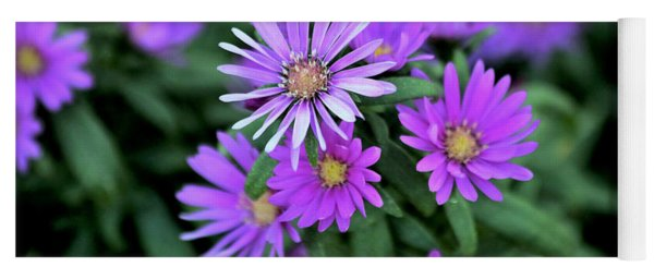 Purple Asters Yoga Mat