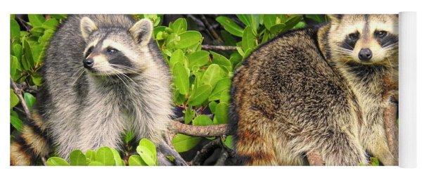 Raccoons In The Mangroves Yoga Mat