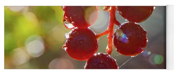 Yoga Mat featuring the photograph Rain Drops On Choke Cherries by Gary Beeler
