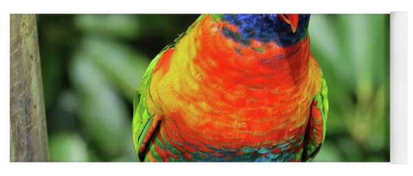 Rainbow Lorikeet Yoga Mat