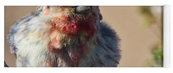 Rare Multicolored Male House Finch Yoga Mat
