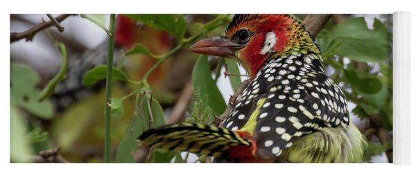 Red-and-yellow Barbet Yoga Mat