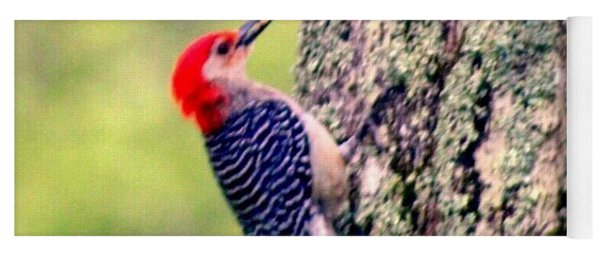 Red Belly Woodpecker  Yoga Mat