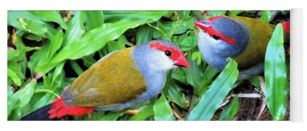 Red-browed Finch Pair Yoga Mat