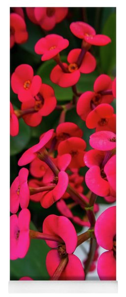 Red Flowers In Bloom Yoga Mat