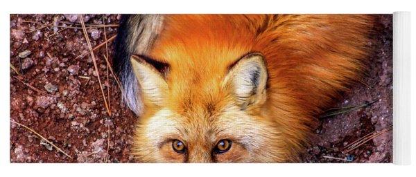 Red Fox In Canyon, Arizona Yoga Mat