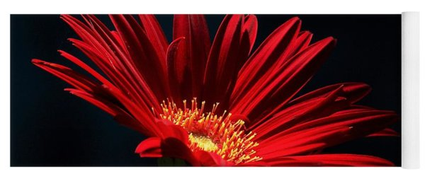 Red Gerber Daisy In Spotlight Yoga Mat