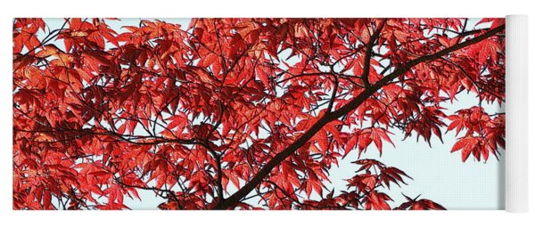 Yoga Mat featuring the photograph Red Japanese Maple Leaves by Debi Dalio