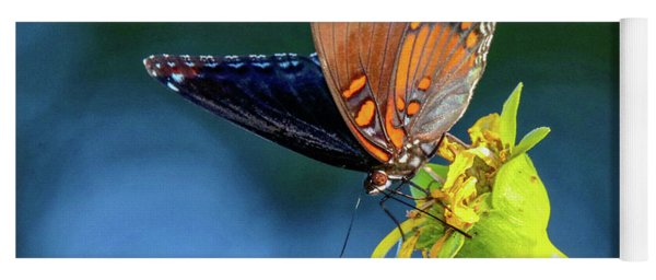 Red-spotted Purple Butterfly Yoga Mat