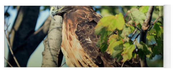 Red-tailed Hawk Looking Down From Tree Yoga Mat