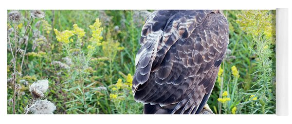 Red-tailed Hawk On Fence Post Yoga Mat