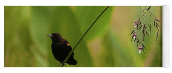 Red-winged Blackbird On Alligator Flag Yoga Mat