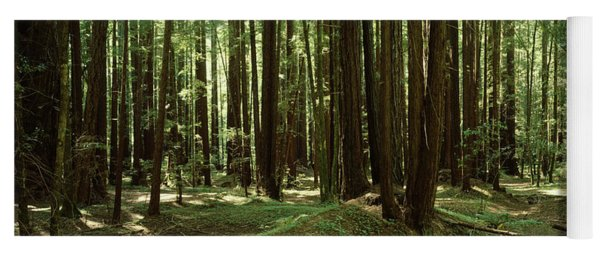 Redwood Trees Armstrong Redwoods St Yoga Mat