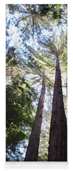 Redwoods, Blue Sky Yoga Mat