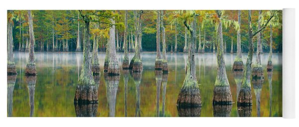 Reflection Of Bald Cypress Taxodium Yoga Mat