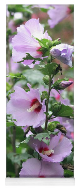 Yoga Mat featuring the photograph Rose Of Sharon Flowers by Trina Ansel