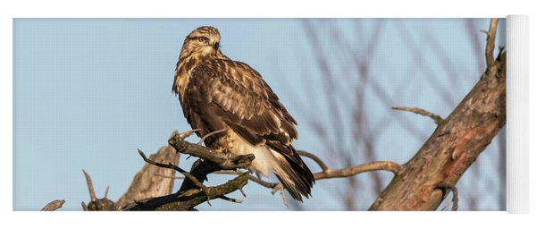Rough-legged Hawk 2018-4 Yoga Mat
