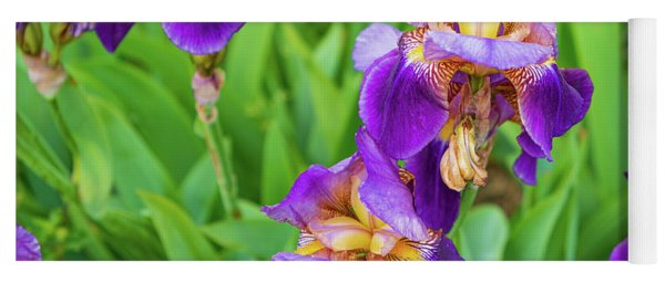 Royal Purple Irise Yoga Mat