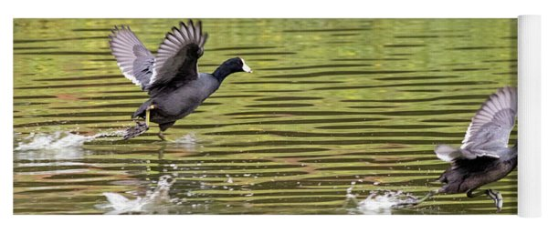 Run Coot Run Yoga Mat