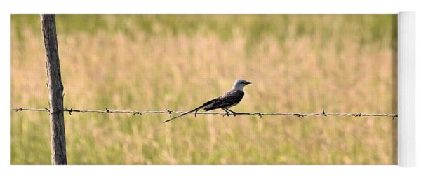 Scissor-tailed Flycatcher On Fence Yoga Mat
