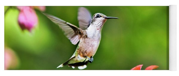 Yoga Mat featuring the photograph Shimmering Breeze Hummingbird by Christina Rollo