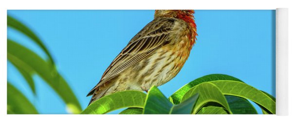 Singing House Finch Yoga Mat