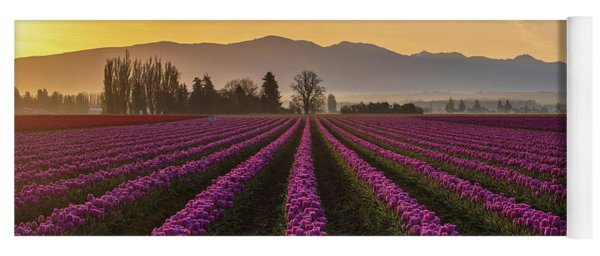 Skagit Valley Morning Rows Of Magenta Tulips Yoga Mat