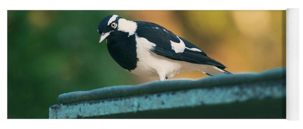 Small Magpie Lark Outside In The Afternoon Yoga Mat