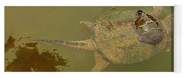 Snapping Turtle With Painted Turtle Feeding, Maryland, Usa Yoga Mat