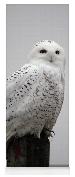 Snowy Owl In Fog Yoga Mat