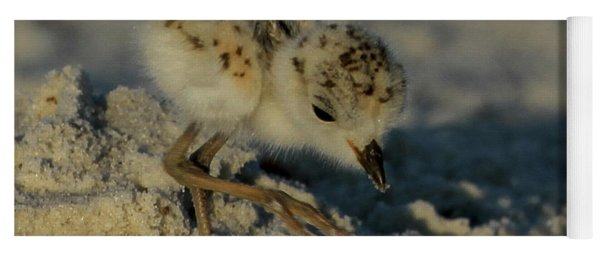 Snowy Plover On The Hunt Yoga Mat