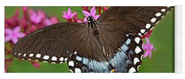 Spicebush Swallowtail Papilio Trollus Yoga Mat