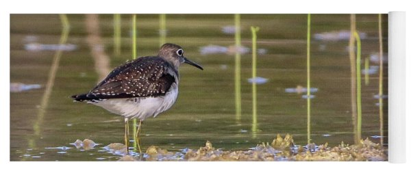 Spotted Sandpiper Reflection Yoga Mat