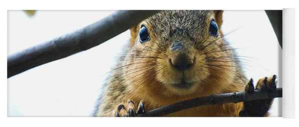 Spying Fox Squirrel Yoga Mat